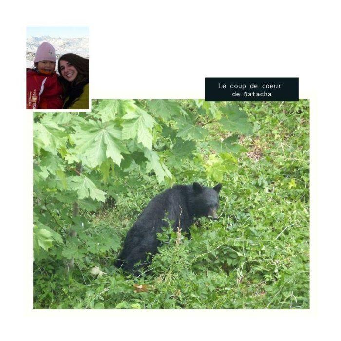 Le coup de coeur de Natacha : un ours noir en Colombie-Britannique. Photo : Natacha de Nord Espaces