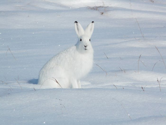 Mais où est le terrier du lapin blanc ? Photo : Julia de Nord Espaces