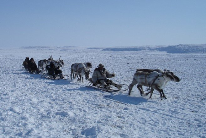Convoi de traîneaux à rennes en Tchoukotka. Photo : Julia de nord Espaces