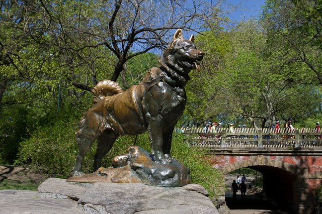 Balto à Central Park, New-York