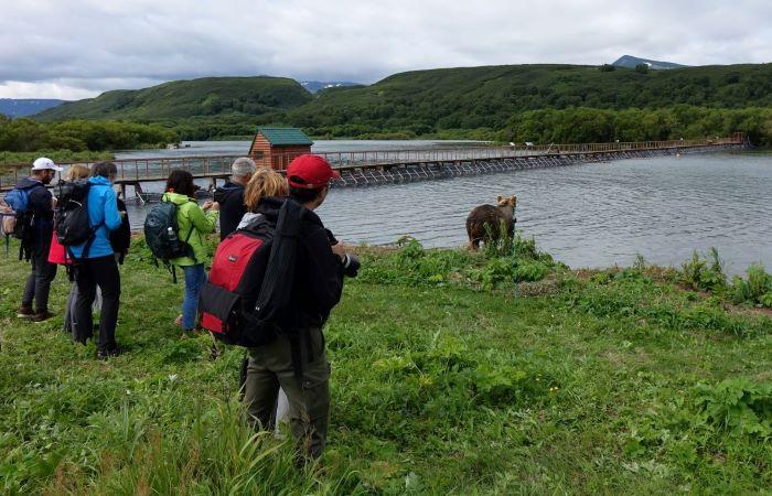 Ours brun du Kamtchatka près du lac Kourile. Photo : Sébastien de Nord Espaces