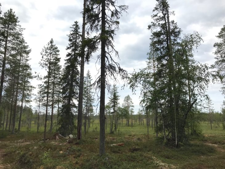 Kuhmo, Carélie finlandaise