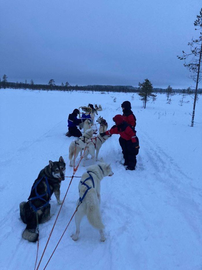 Traîneau à chiens en Laponie suédoise par Samuel F., décembre 2020