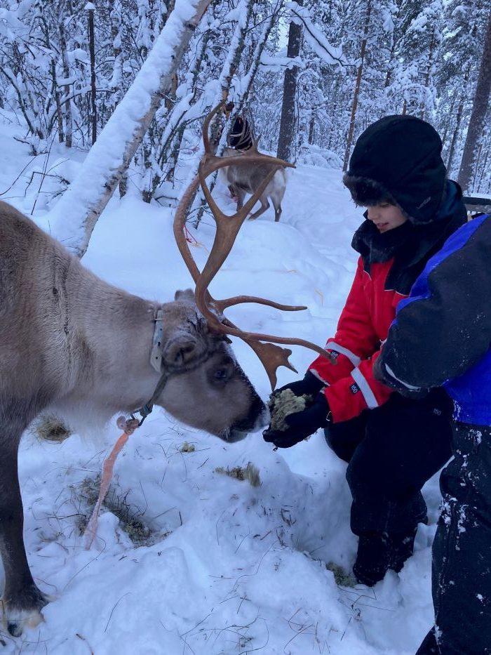 Nourrissage du renne en Laponie suédoise par Samuel F., décembre 2020