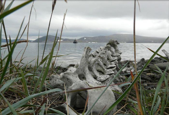 Ossement de l'Allée des Baleines en Tchoukotka. Photo Nord Espaces