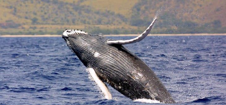 Une baleine en Alaska - Nord Espaces Boréalis