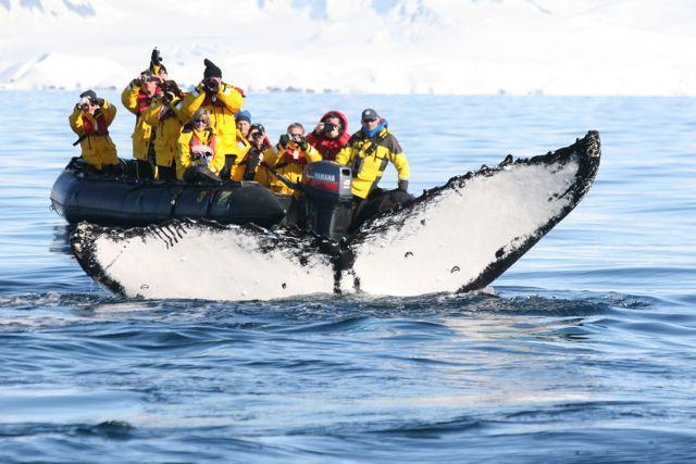 Baleine en Antarctique - Nord Espaces Boréalis
