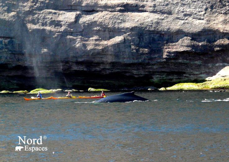 Baleines à l'île de Bonaventure en Gaspésie