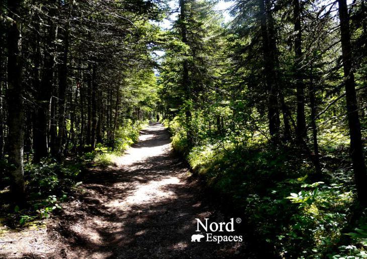Chemin forestier de l'île de Bonaventure en Gaspésie