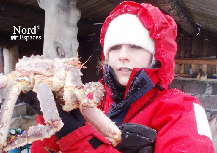 Crabe royal du Kamtchatka en hiver