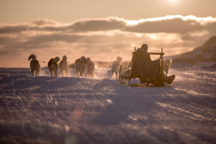 Traîneau à chiens sur le glacier Lyngmark au Groenland