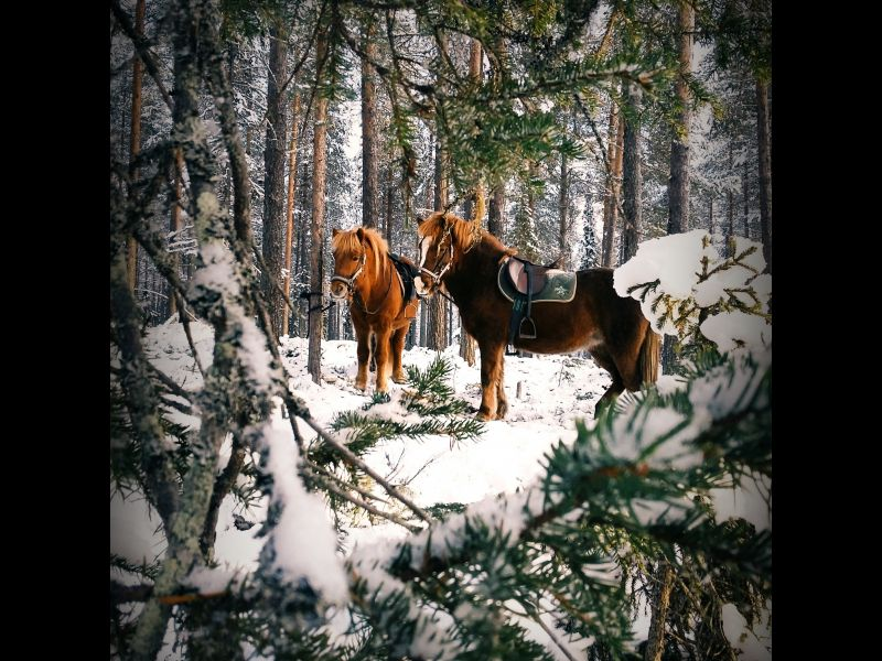 Promenade à cheval dans la neige, Finlande