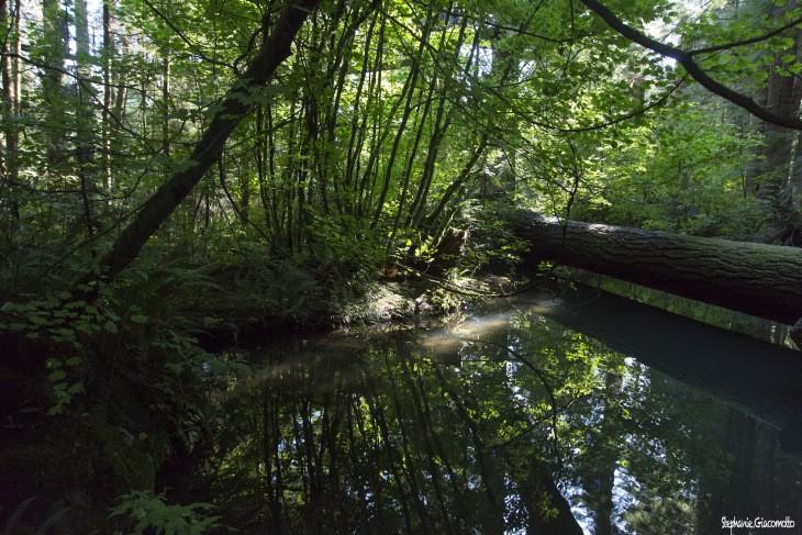 Forêt pluviale tempérée de North-Vancouver, Canada - Nord Espaces