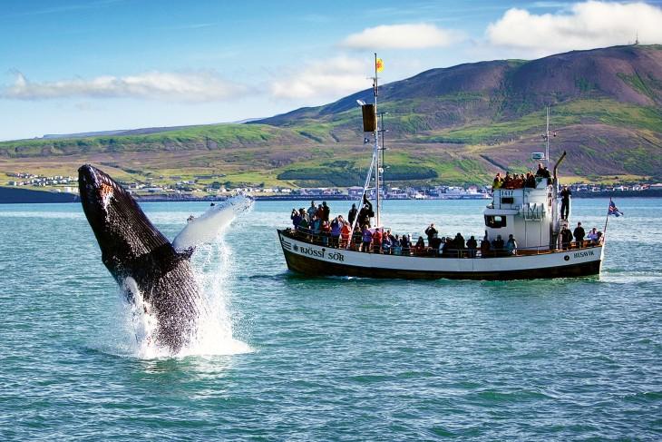 Saut d'une baleine en Islande - Nord Espaces
