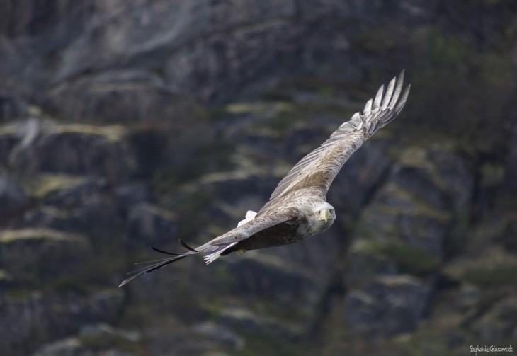 Aigle pêcheur au Canada - Nord Espaces