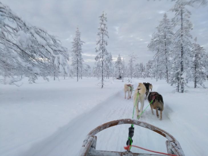 Traîneau à chiens en Laponie finlandaise - Nord Espaces