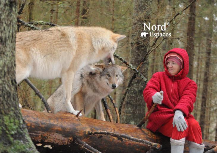 Approche des loups de la station biologique du Docteur Pajetnov, Russie