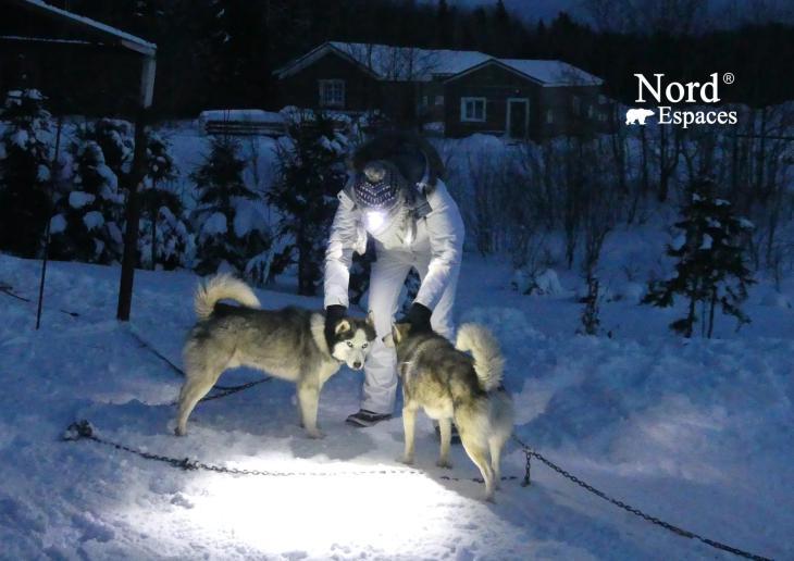 Traîneau à chiens en Russie, husky