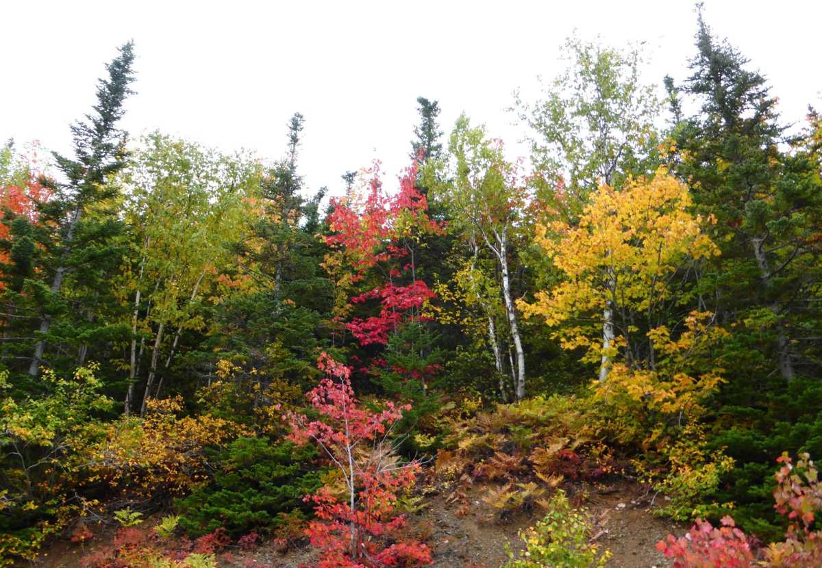Gaspésie, Québec, Canada - Nord Espaces