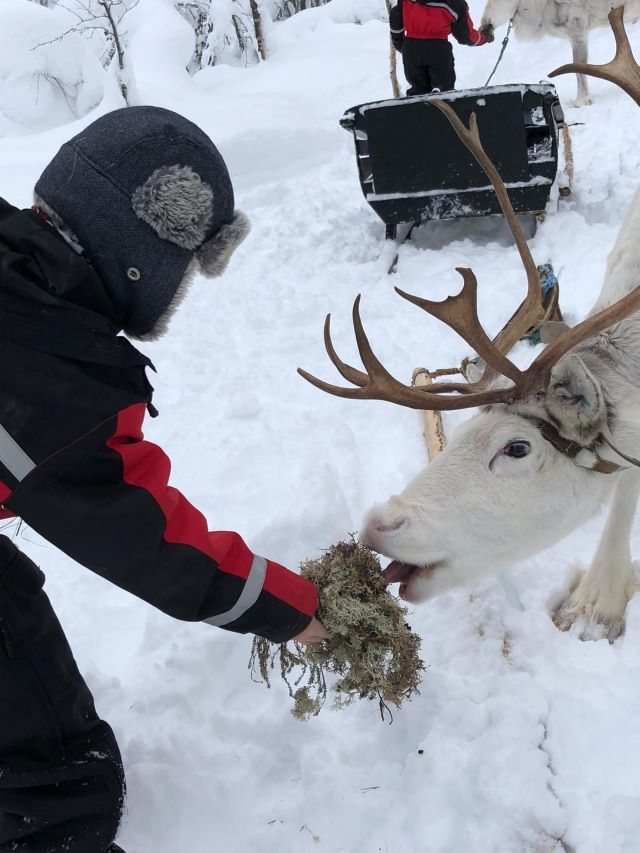 Nourrissage des rennes en Laponie, février 2021. Photo Brigitte B.