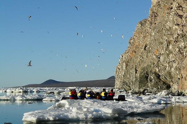 Observation des oiseaux marins à l'île Wrangel. Photo Nord Espaces