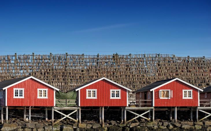 Séchage de la morue aux îles Lofoten en Norvège