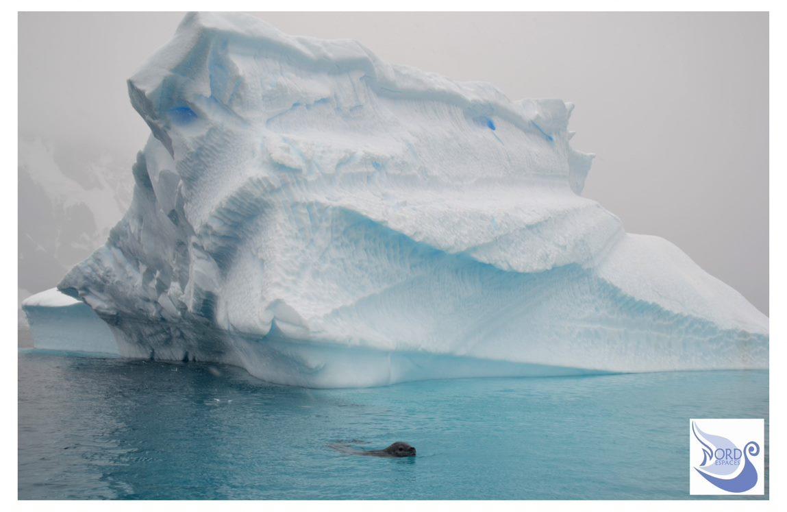 Nage à l'ombre des icebergs de l'Antarctique. Photo : Valérie de Nord Espaces